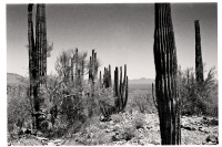 Jour 4 - Sonoran Desert - Arizona