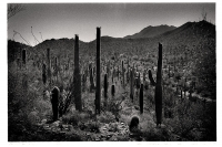 Jour 6 - Saguaro National Park - Arizona